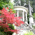 Search_category.htm?q=acer+palmatum+atropurpureum  Acer