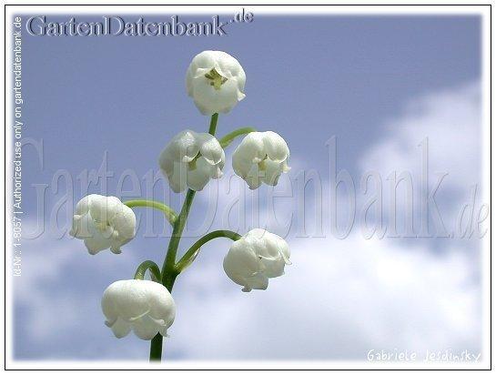 Blüten Bilder (533 Fotos)