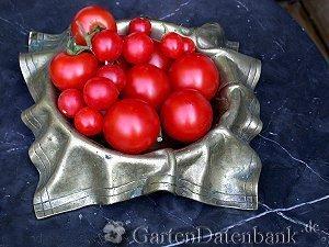 tomaten anbau pflege braunf ule u krautf ule bek mpfen lycopersicon esculentum schneiden. Black Bedroom Furniture Sets. Home Design Ideas