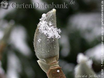 Garten Im Winter Gestalten - Tipps Für Pflanzen Pflanzen Garten Im Winter