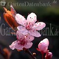 Rot  Rote Bl�ten