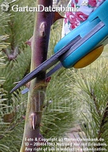 Pflanzenpflege 10 Regeln: Schneiden überwintern Vermehren Düngen ... Einige Regeln Die Man Beim Umpflanzen Beachten Muss