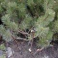 Radical pruning